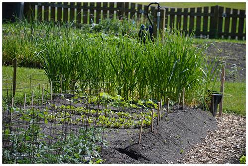 Les jardiniers pourront retourner à leurs cultures à partir du 18 mai. CRÉDIT : ÉRICK DESCHÊNES - ARCHIVES